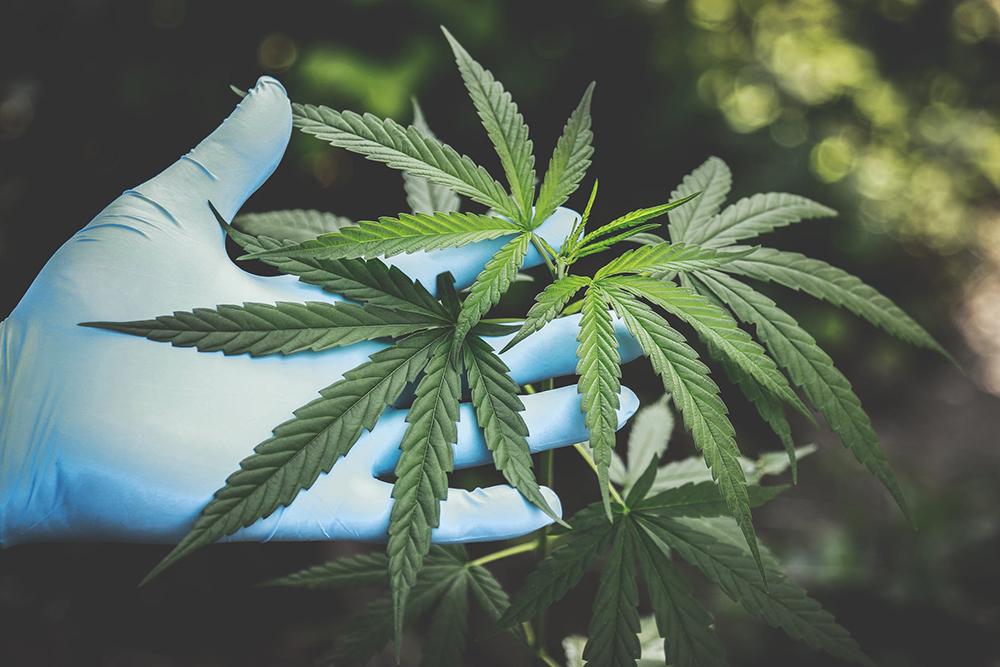 cannabinoid